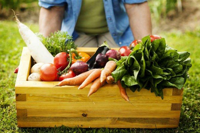 alimentos organicos