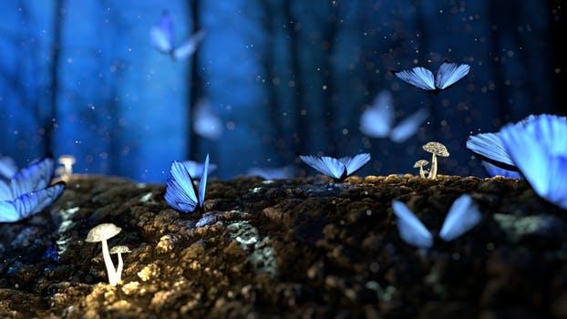 En distintos lugares del mundo y en distantes épocas se han registrado episodios de lluvia de animales. Sí, tal como se lee, centenas de animales de una misma especie cayendo desde el cielo. Se ha especulado mucho al respecto. Por décadas ha existido el debate sobre si la lluvia de animales es realidad o fantasía. Animales cayendo desde el cielo En la mayoría de los casos de lluvia de animales de los que se ha tomado registro, se cuenta que los animales caídos del cielo, son por lo general batracios (sapos, ranas) peces y aves. ¿Por qué caen los animales del cielo? Por décadas distintos científicos han buscado una explicación al fenómeno. Unos para defenderlo, otros para desmentirlo. Una teoría muy aceptada sobre la precipitación de animales es la propuesta por el físico francés André Marie Ampère. Según Ampère la lluvia de animales se produce cuando una corriente de aire o algún fenómeno meteorológico como una tromba o un tornado, transportan a una población de animales de un lugar a otro, donde caen en forma de lluvia. La tesis de Ampère es muy aceptada por la comunidad científica. Y explicaría porque la lluvia es casi siempre de animales pequeños y del tipo acuático o anfibio. Otras explicaciones del fenómeno Aunque la ciencia ha dado su punto de vista con respecto al fenómeno no han faltado las explicaciones desde otros frentes. Uno de los más estudiosos del fenómeno de la lluvia de animales, desde el punto de vista paranormal, fue Charles Hoy Fort. Al respecto de la lluvia de animales Fort decía que se debía a la tele transportación.